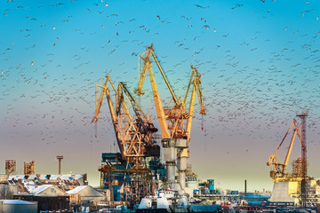 Port cranes close-up and flying seagulls