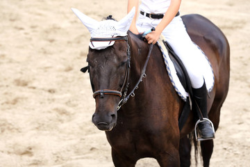 Rider girl at advanced dressage test on equestrian competition