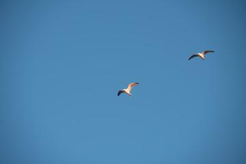 Soaring gulls in the blue sky