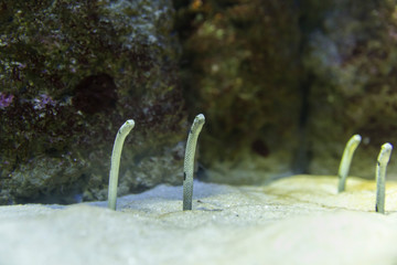 Sea worms