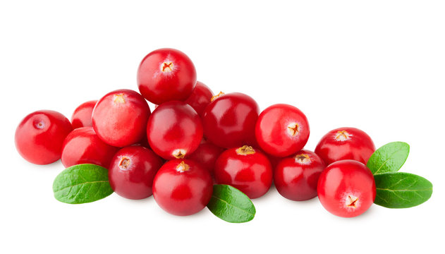 cranberry isolated on white background, clipping path, full depth of field