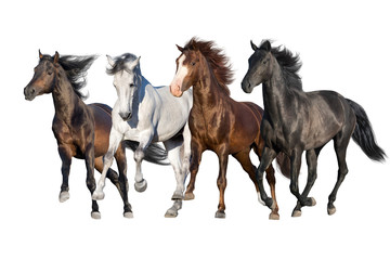 Wall Mural - Horse herd run fast in white background