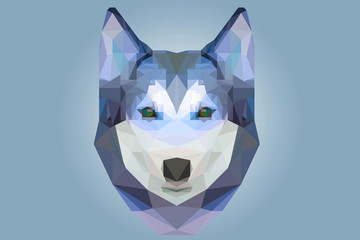 Low poly head of husky dog in blue color