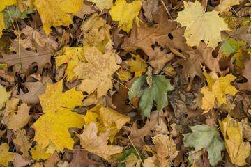 Gelb verfärbtes Herbstlaub