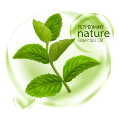 Peppermint leaf, Nature Essential oil