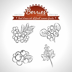 Rowan berry Collection of fresh fruits with leaf. Vector illustration. Isolated