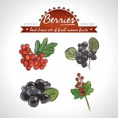 Rowan berry. Hand drawn collection of vector sketch detailed fresh fruits. Isolated