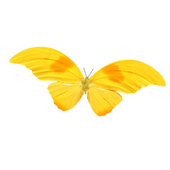 beautiful tropical yellow butterfly