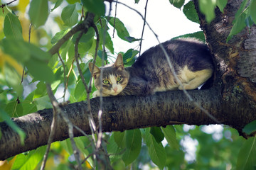 cat on the tree