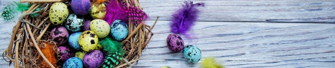 Colored colored quail eggs, with colorful feathers on white wooden background, happy Easter concept