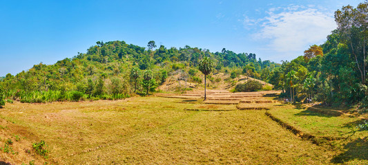 Panorama of the fields in jungle of Chaung Tha, Myanmar