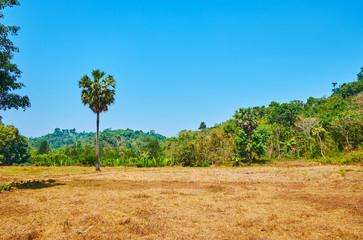 Fields among the jungle, Chaung Tha, Myanmar