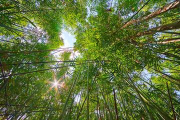 The sky through the jungle, Chaung Tha, Myanmar