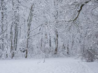 Wintermärchen im Wald