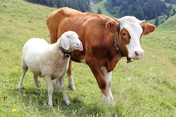 Dicke Freunde mit Kalb und Schaf