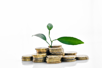 Plant Growing In Savings Coins - Investment And Interest Concept - Изображение