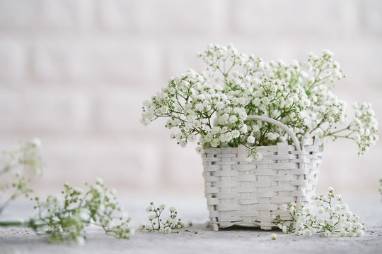 Close-up of baby's breath flowers