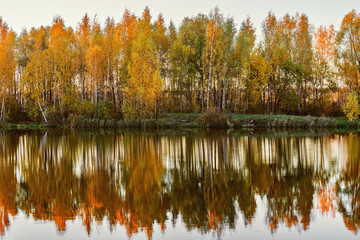 Autumn birch trees by the lake.
