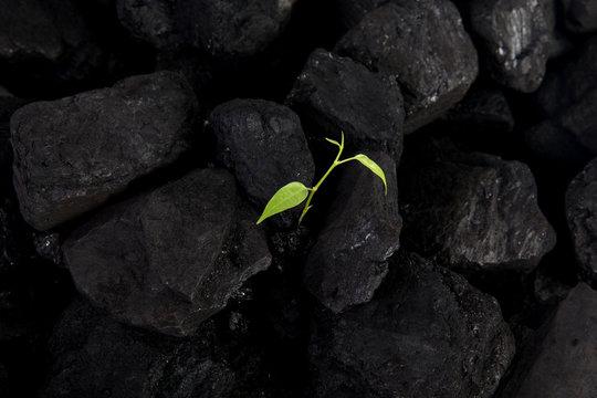 Carbon neutral, CARBON FOOTPRINT