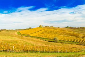Poster Wijngaard Croatia, Daruvar, beautiful countryside landscape, colorful vineyards in autumn on hill