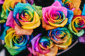 Close up of rainbow coloured roses, selective focus, LGBTQI, variety and diversity concept.