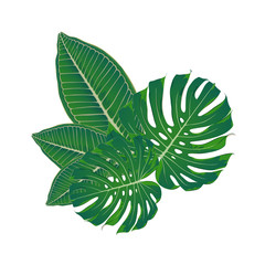Isolated green leaves of Monstera and Plumeria, frangipani. Hand-drawn, vector element for design.
