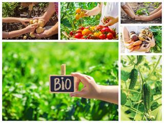 Collage vegetables. Garden. Food bio. selective focus.