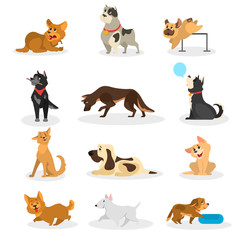 Dog set. Collection of pet doing different activity