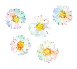 flower camomile set watercolor