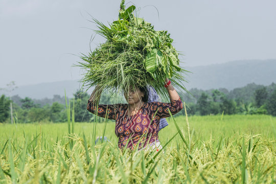 Woman carrying crops on head while walking in farm against sky