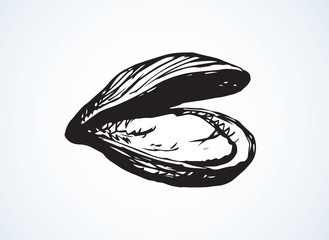Oyster. Vector drawing