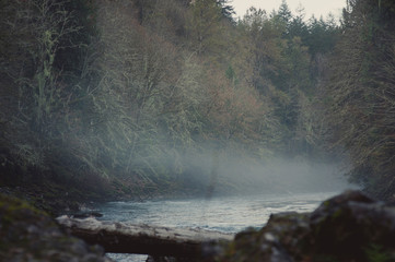 Tranquil view of river amidst trees in forest during foggy weather