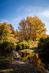 Stream in forest against sky during autumn
