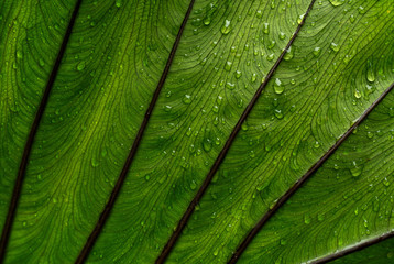Close-up of fresh wet leaf