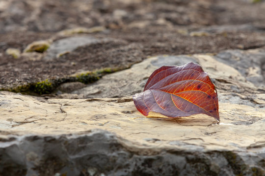 rocks in the autumn