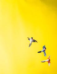 Three fake hummingbirds