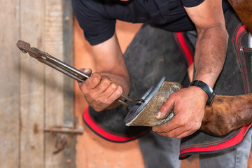 Farrier at work on horses hoof at the stable.