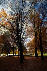 wonderful autumn