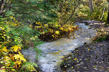 River flowing through the mountain surrounded by rocks and autumn colored leaves along the hiking trail to Upper Dewey Lake in Skagway, Alaska