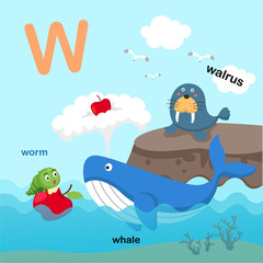 Illustration Isolated Alphabet Letter W-walrus,whale,worm.vector