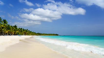 Palms coastline on caribbean beach, Island Saona
