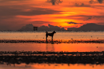 Silhouette of dog standing on sea at sunrise
