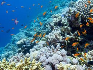 Keuken foto achterwand Koraalriffen Colorful coral reef on the bottom of tropical sea, underwater landscape.