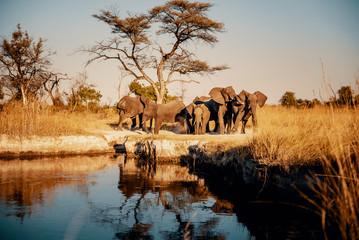 Gruppe Elefanten am Ufer des Kwando River bei Sonnenuntergang, Caprivi, Namibia