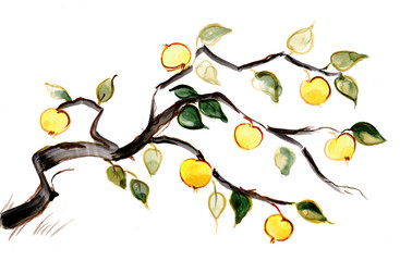 branch of apple tree
