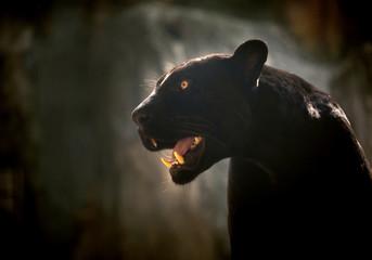 Portrait of a black jaguar or panther. Wall mural