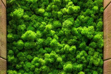 The texture of the moss. backgruond close up interior design. top view close up