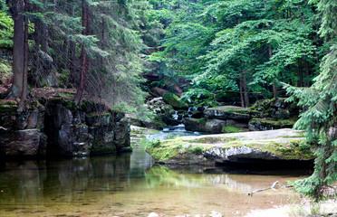 Mountain stream in Europe.