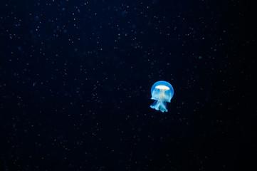blue jellyfish world