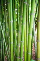 Spoed Foto op Canvas Bamboo 한국의 문화유산 동양 문화 풍경 백그라운드